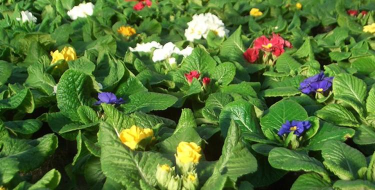 Gärtnerische Produktion